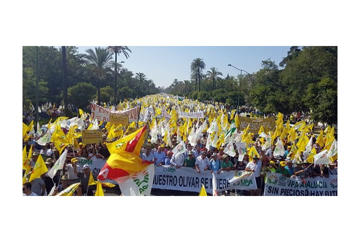 Manifestación en defensa del olivar tradicional